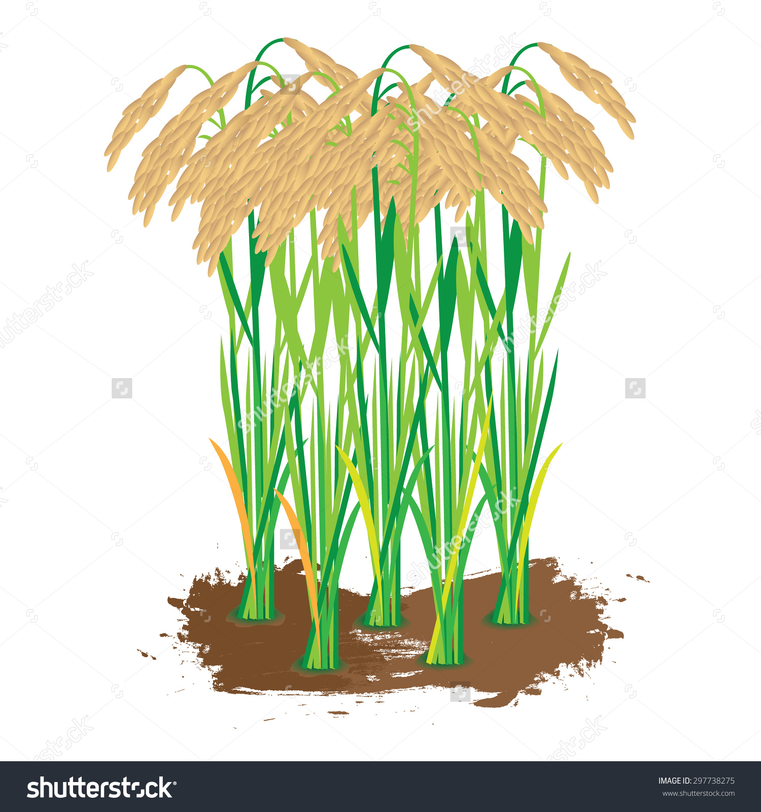 Clipart rice plant.