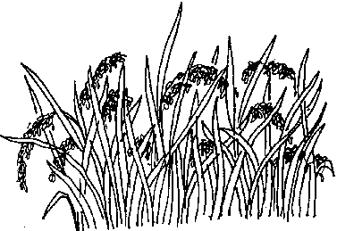 Rice Paddy PNG Black And White Transparent Rice Paddy Black.