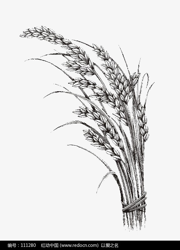 Rice Plant Clipart Black And White.