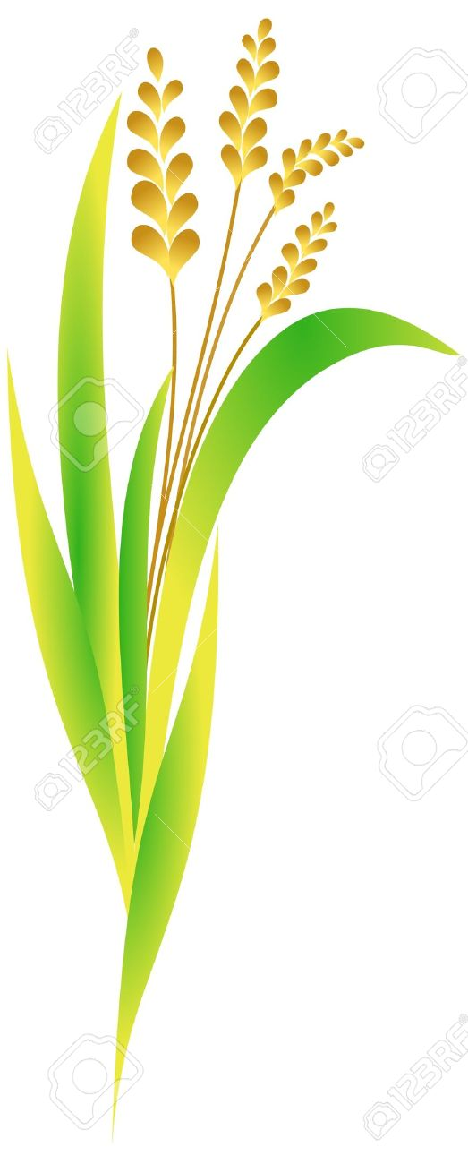 Rice planting clipart - Clipground