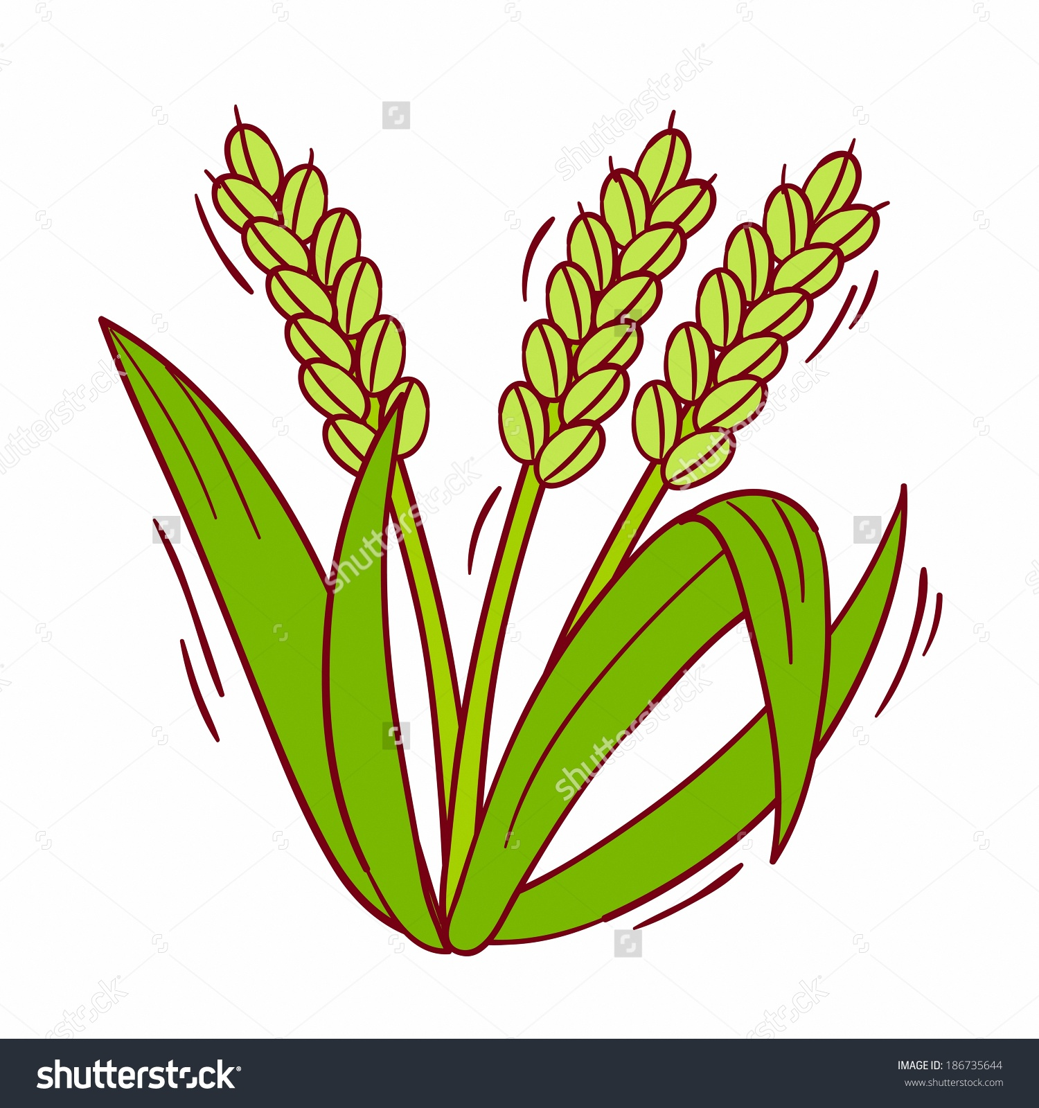 Illustration Rice Plant Stock Illustration 186735644.