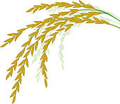 Brown Rice Plant Clipart.