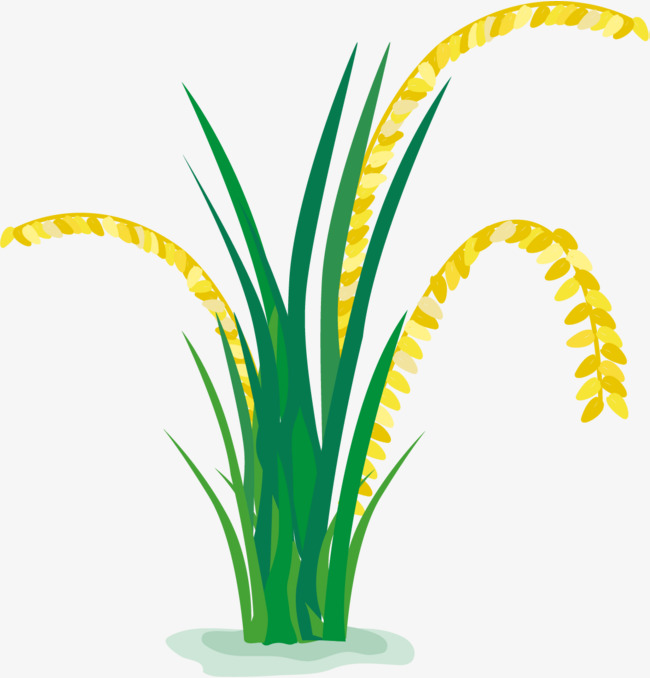 Rice Crop Clipart Png.