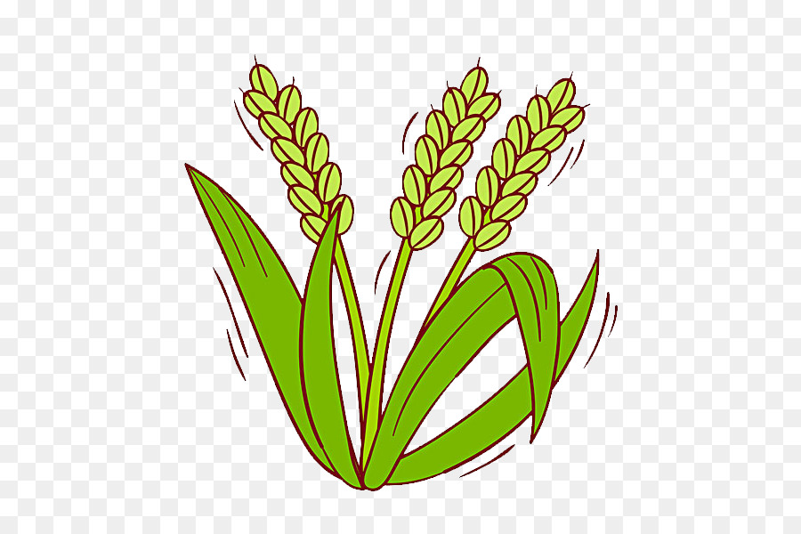 Cereal clipart rice plant, Cereal rice plant Transparent.