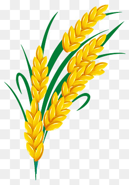 Rice Grain Clipart Png.