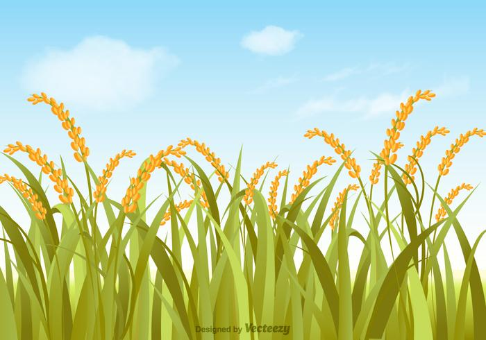Vector Rice Field Illustration.