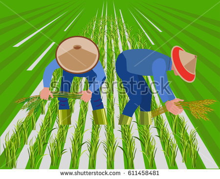 Rice field clipart 7 » Clipart Station.