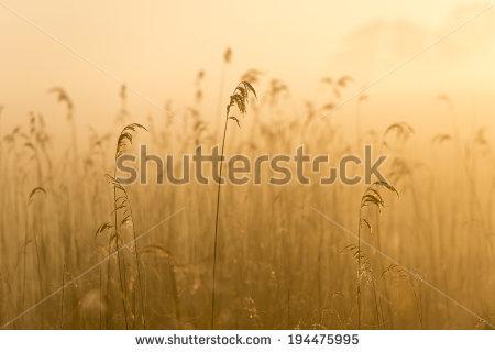 Foggy Field Lizenzfreie Bilder und Vektorgrafiken kaufen.