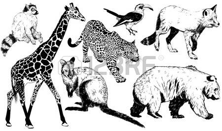 57 Ring Tailed Lemur Stock Vector Illustration And Royalty Free.