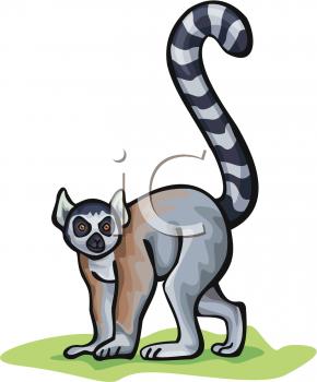 A Cartoon Ring Tailed Lemur.