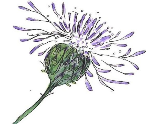 Love this drawing of a thistle!going to try something like it.