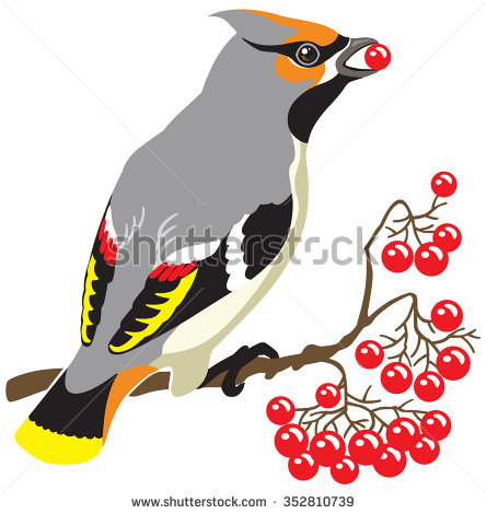 Bird Eating Stock Images, Royalty.