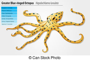 Blue ringed octopus Clip Art Vector Graphics. 19 Blue ringed.