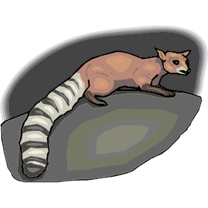 Ringtail Cat clipart, cliparts of Ringtail Cat free download (wmf.