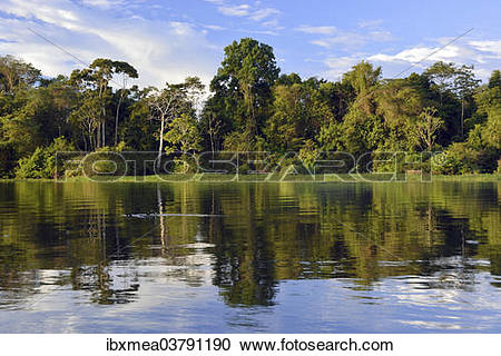 "Stock Photography of ""Bank of the Rio Solimoes river with flooded."
