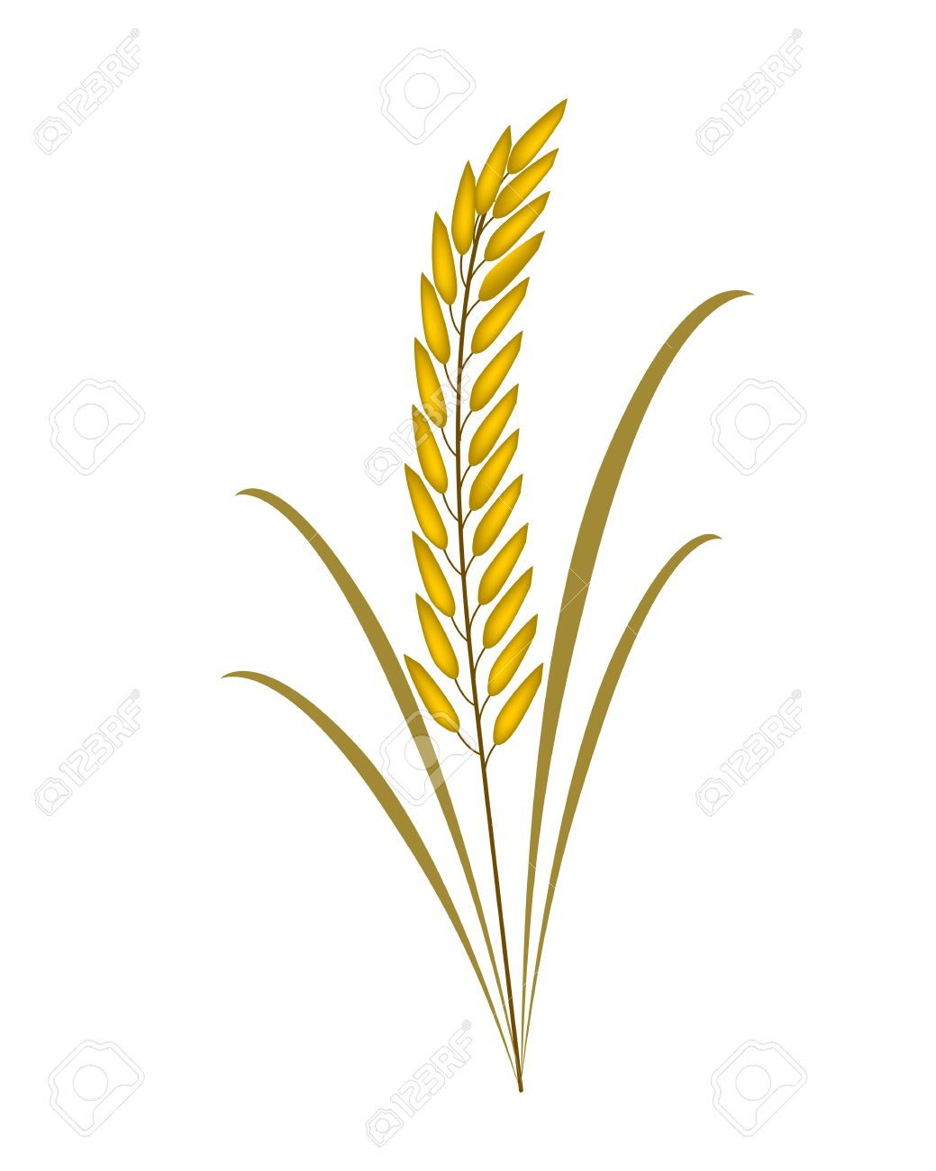 Rice leaf clipart.