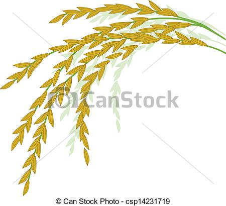 Ripe rice Stock Illustrations. 274 Ripe rice clip art images and.