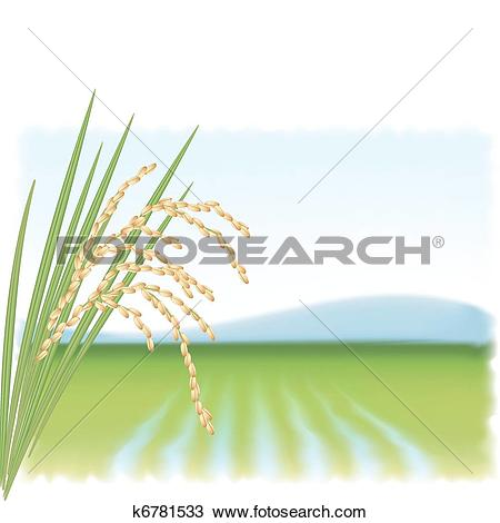 Clipart of Rice field and a branch of ripe rice. Vector.