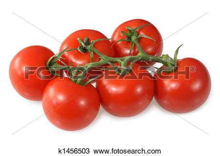 Stock Photo of Red vine ripened British tomatoes. k1456503.