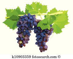 Vine ripened Clipart Illustrations. 48 vine ripened clip art.