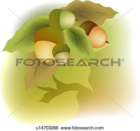 Stock Illustration of Ripening acorns u14703288.