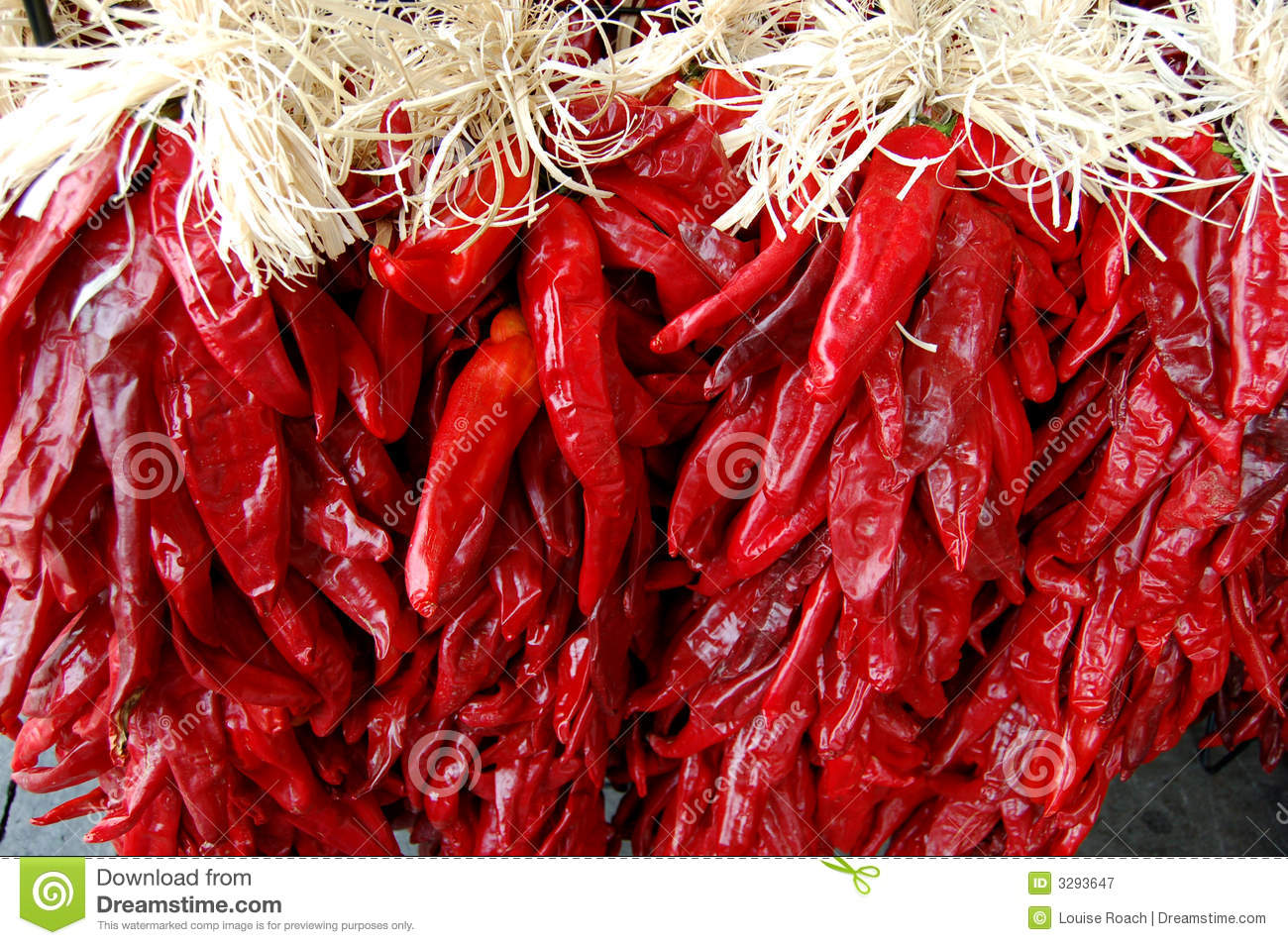 Chile Ristras Royalty Free Stock Photography.