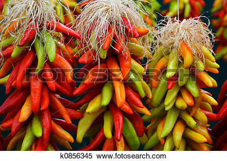 Stock Image of 3 Chile Ristras k0856345.