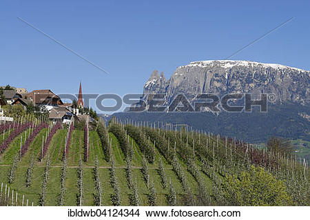 Stock Photo of Orchard near Unterinn on the Ritten Renon with.