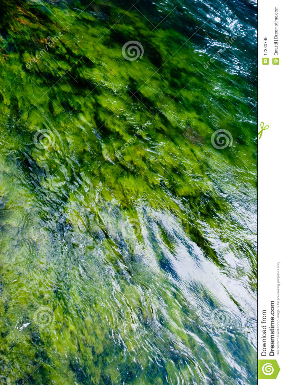 Green Algae River Royalty Free Stock Photo.