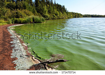 Green Algae Stock Photos, Royalty.