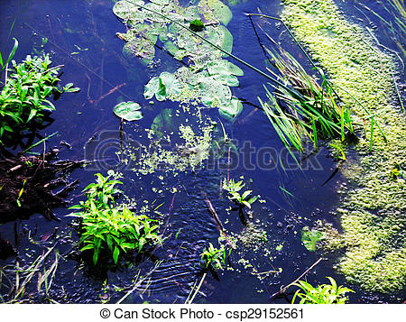 Stock Image of forest river algae in cold clear waters. Ukraine.