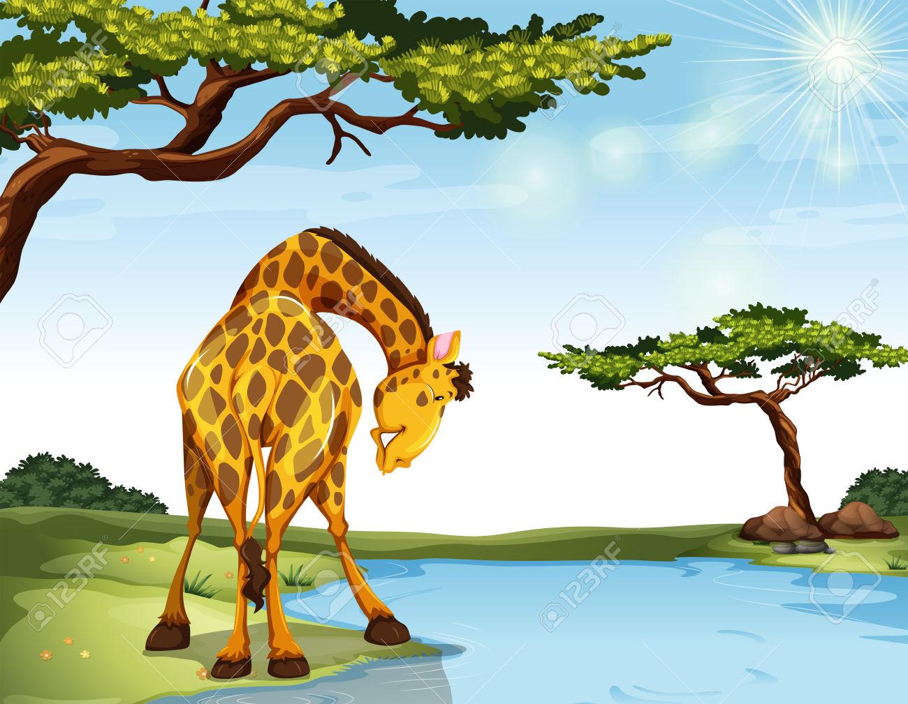 Giraffe Standing At The River Bank Royalty Free Cliparts, Vectors.