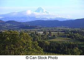 Stock Images of Cherry farm orchard near Hood River.