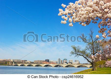 Stock Images of Cherry blossom near Potomac River in Washington DC.