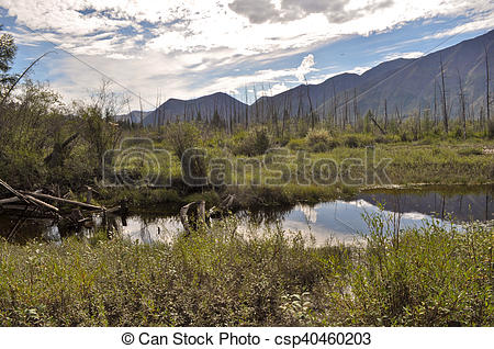 Stock Photography of Landscape marshy floodplain of the river.