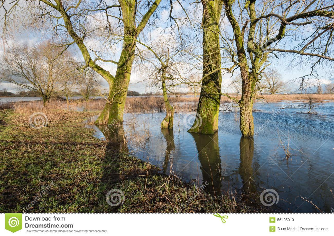 Bare Trees In The Floodplain Lakes Stock Photo.