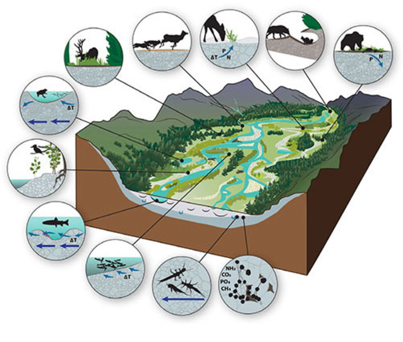 Why river floodplains are key to preserving nature and.