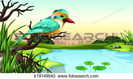 Clipart of A river kingfisher k19149543.