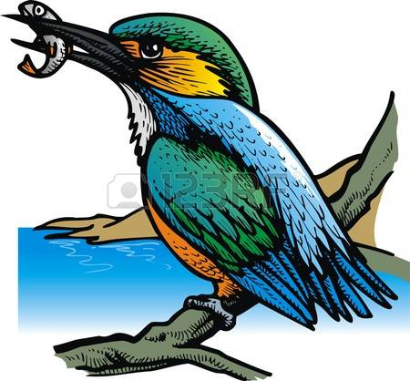 359 Kingfisher Bird Stock Vector Illustration And Royalty Free.