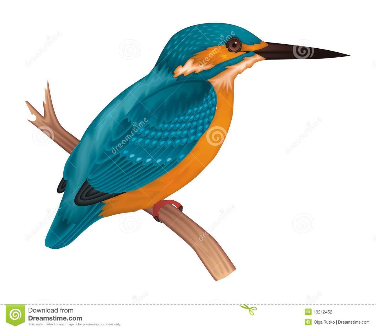 Kingfisher Stock Illustrations.