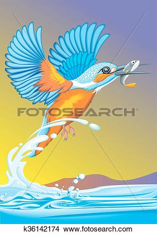 Clipart of kingfisher bird on the river k36142174.