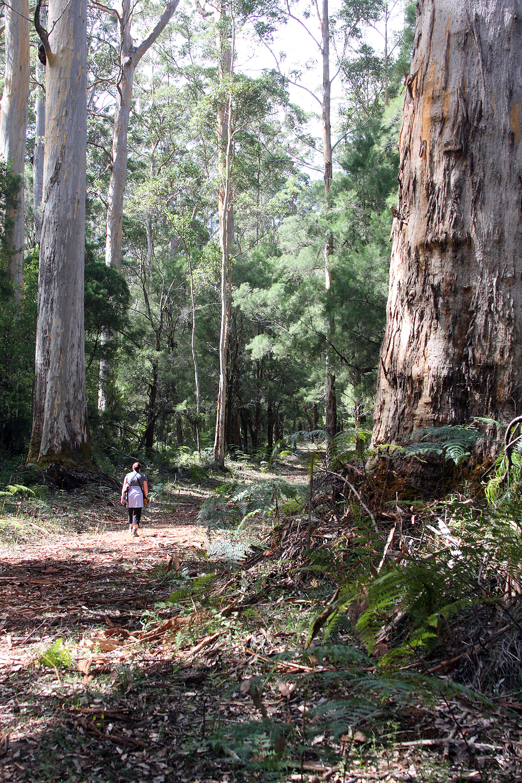 Warren River Loop Walk, Southern Forests, Pemberton, Warren.