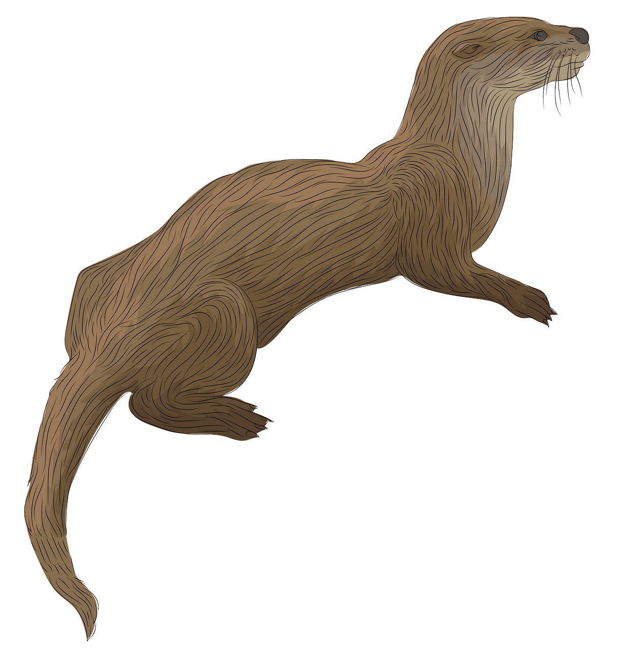 River Otter clipart. Free download..