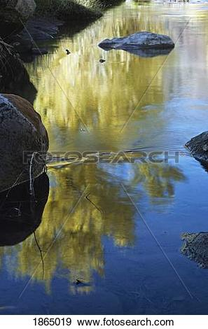 Stock Photograph of Reflection of autumn cottonwoods in the Jemez.