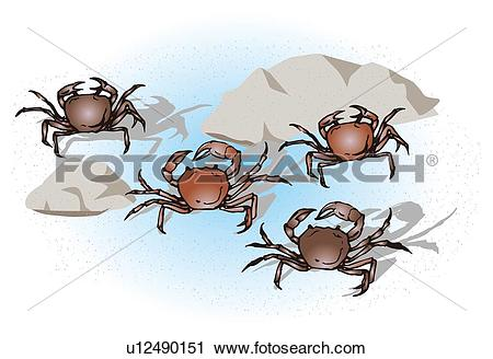 Clipart of Four river crabs in water, high angle view u12490151.
