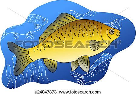 Clipart of vertebrate, crucian carp, water plant, river, fresh.