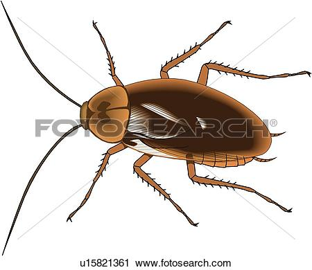 Roach Illustrations and Clip Art. 70 roach royalty free.