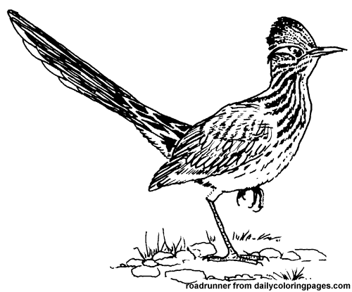 Roadrunner Bird Clipart 20 Free Cliparts Download Images
