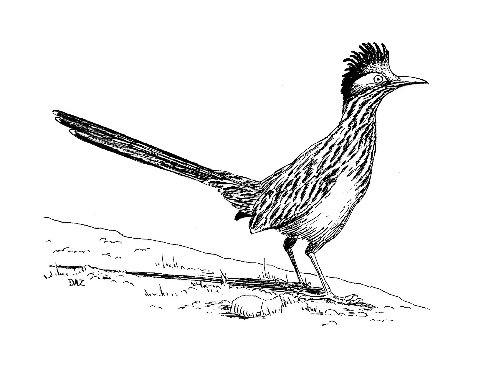 roadrunner clipart black and white 20 free Cliparts ...