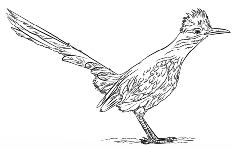 Roadrunner coloring pages.